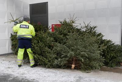 Weihnachtsbaum Service.Weihnachtsbaum Entsorgung Startet Nächste Woche